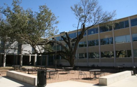 Facilities removed a few limbs from the tree in the Doyle courtyard in February 2011.
