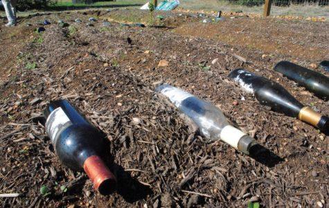 Student to design new garden