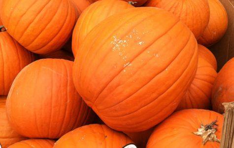 Embrace the pumpkin: ways to enjoy autumn's signature food