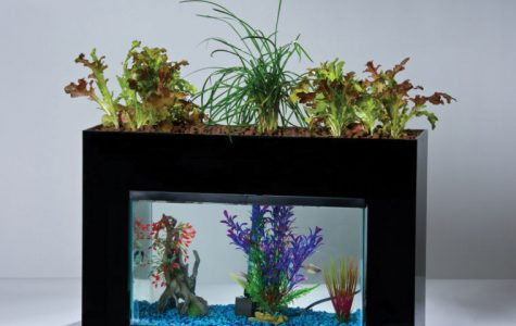 Aquaponics is a sustainable form of agriculture. The fish waste is converted into plant nutrients.