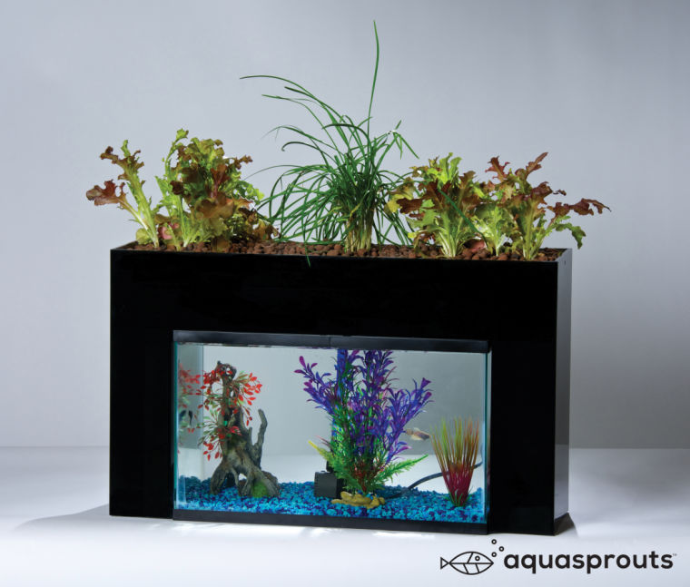Aquaponics+is+a+sustainable+form+of+agriculture.+The+fish+waste+is+converted+into+plant+nutrients.