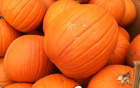 October begins, everyone get ready for fall pumpkin season