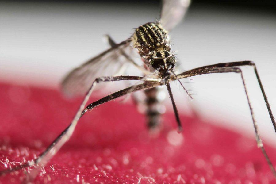 Zika+virus+causes+unnecessary+panic