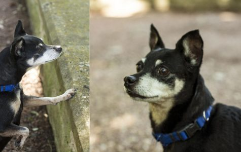 Dogs of St. Edward's speak profound truths on vegetarianism, squirrels