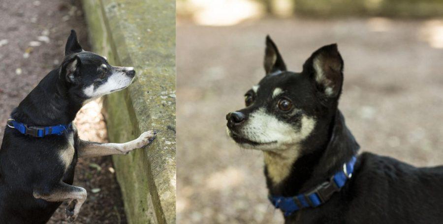 Dogs+of+St.+Edward%27s+speak+profound+truths+on+vegetarianism%2C+squirrels