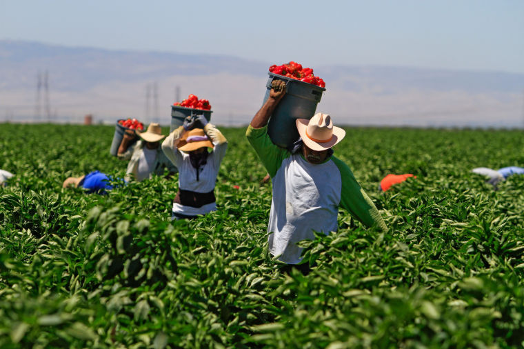 Undocumented+farm+workers+would+be+affected+by+new+policy.%C2%A0