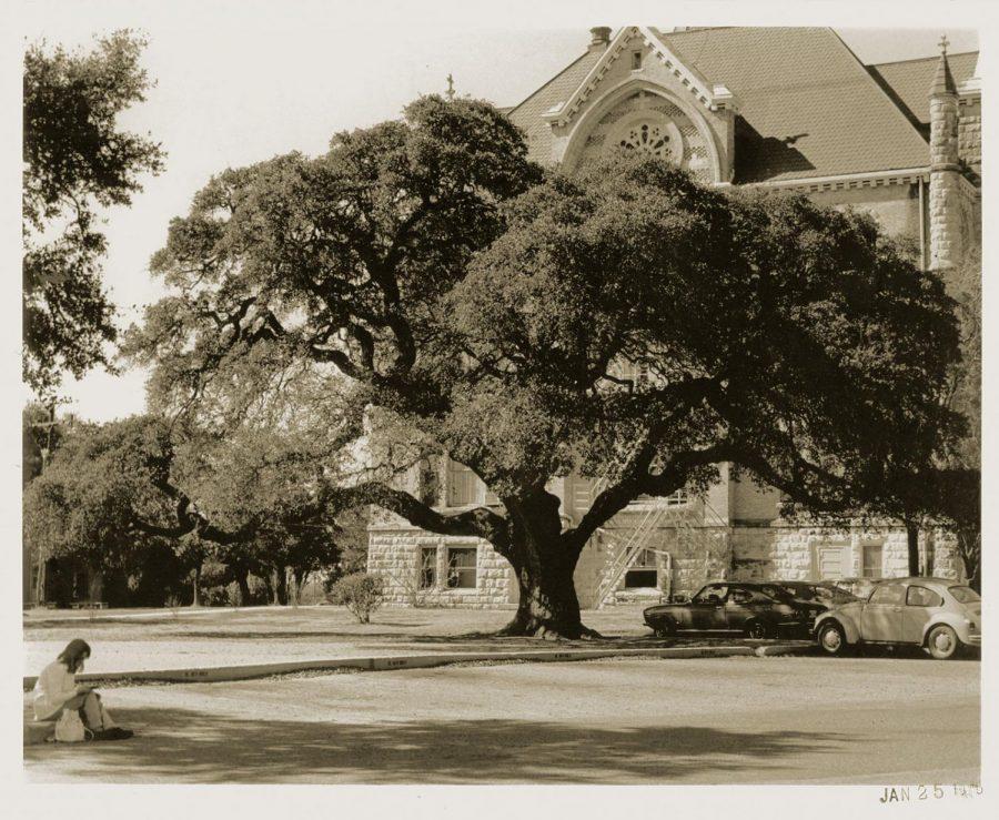 The Sorin Oak in 1974.