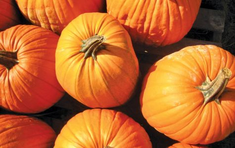 Carving pumpkins for Halloween is a historic tradition passed down from Celtic immigrants. It is one of the many activities people enjoy during the fall season.