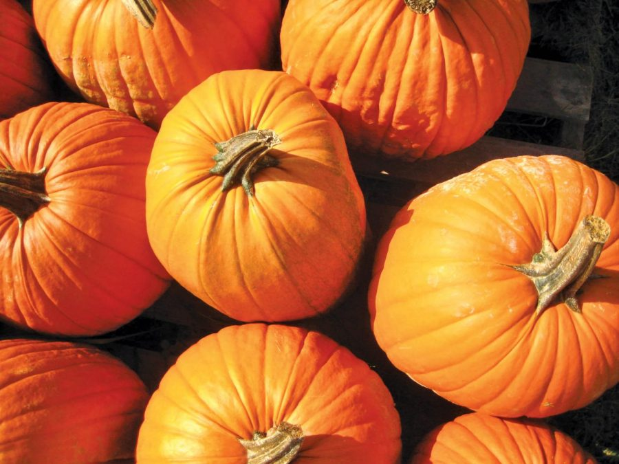 Carving+pumpkins+for+Halloween+is+a+historic+tradition+passed+down+from+Celtic+immigrants.+It+is+one+of+the+many+activities+people+enjoy+during+the+fall+season.